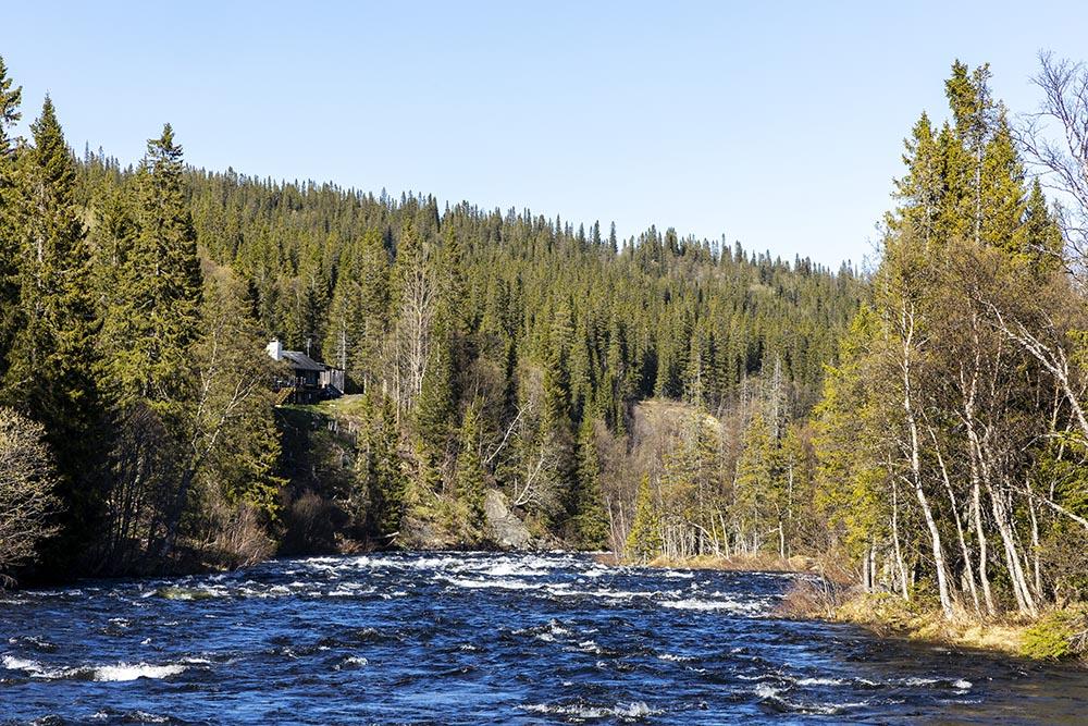 Dammån vid Bydalen i Åre Kommun